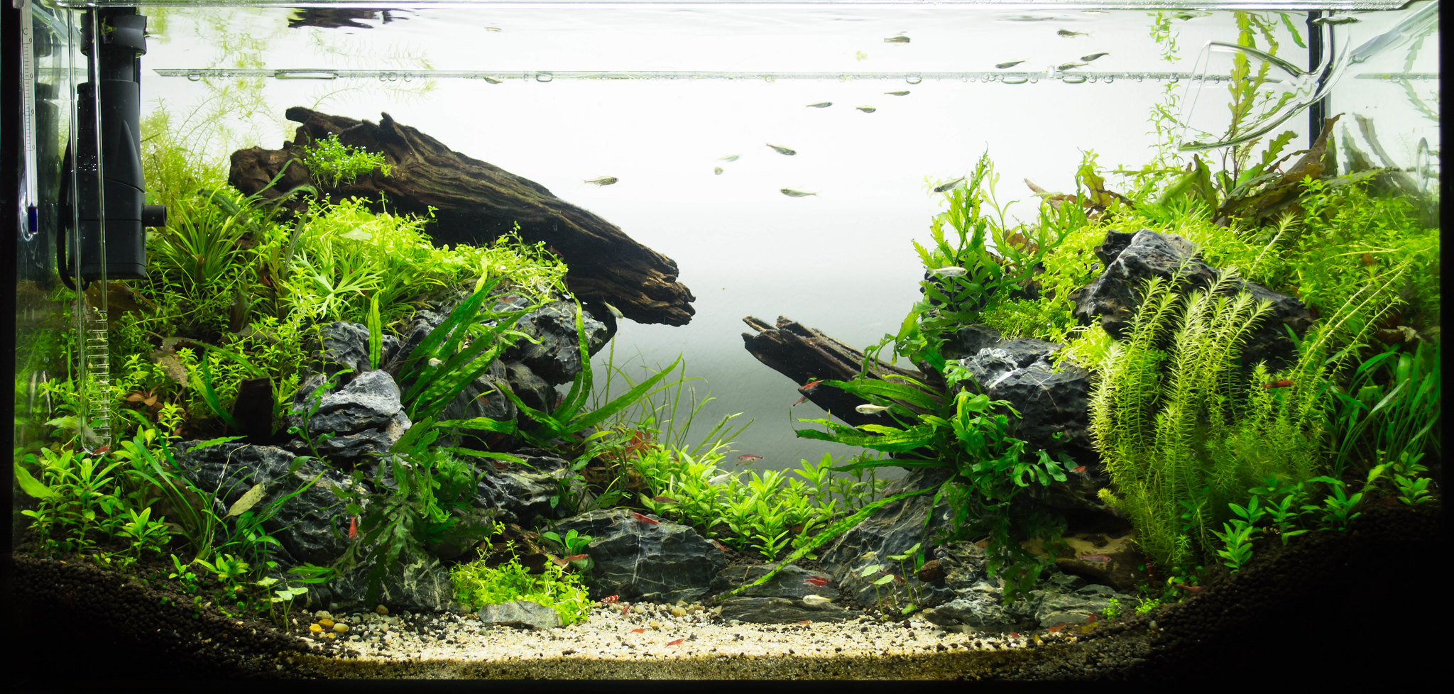 Aquascaping The Complete Guide For Beginners